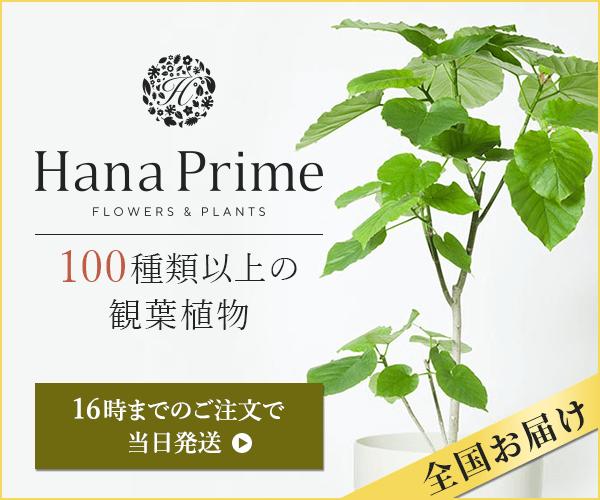 観葉植物通販のGreenjungle(グリーンジャングル)