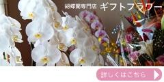 胡蝶蘭専門店ギフトフラワーのポイント対象リンク